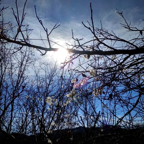 Sunlight Tree Branch Bare Tree Silhouette Rural Scene Sky