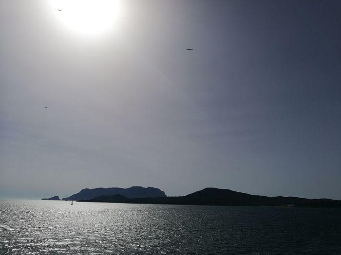 Bird Flying Water Mountain Sea Beach Sun Sky Animal Themes Landscape