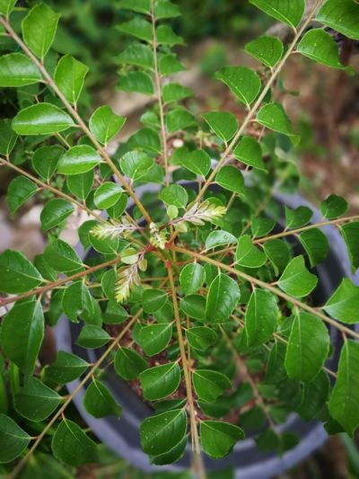 curry leaves Currys Food Ingredient Asian Foods Smal Leaf Social Issues Close-up Animal Themes Plant Green Color Served Prepared Food