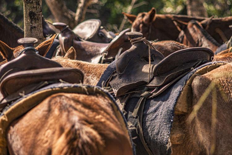 Close-up of horses