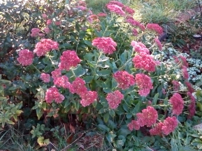 Flower Freshness Beauty In Nature Pink Color Flower Head Outdoors