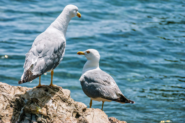Seagulls Seagulls And Sea Two Birds Alone Alone Time Bird Vertebrate Animals In The Wild Animal Wildlife Animal Themes Animal Water Group Of Animals Focus On Foreground Solid Rock Perching Seagull Rock - Object No People Day Sea Nature Two Animals