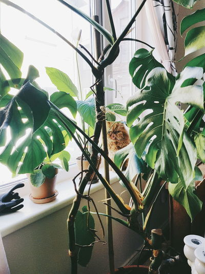 Cat on potted plant