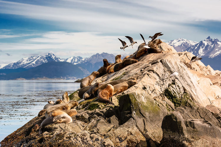 Scenic view of animals on seashore