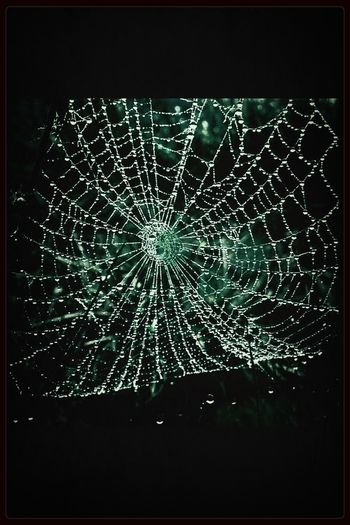 Glass Spiders...