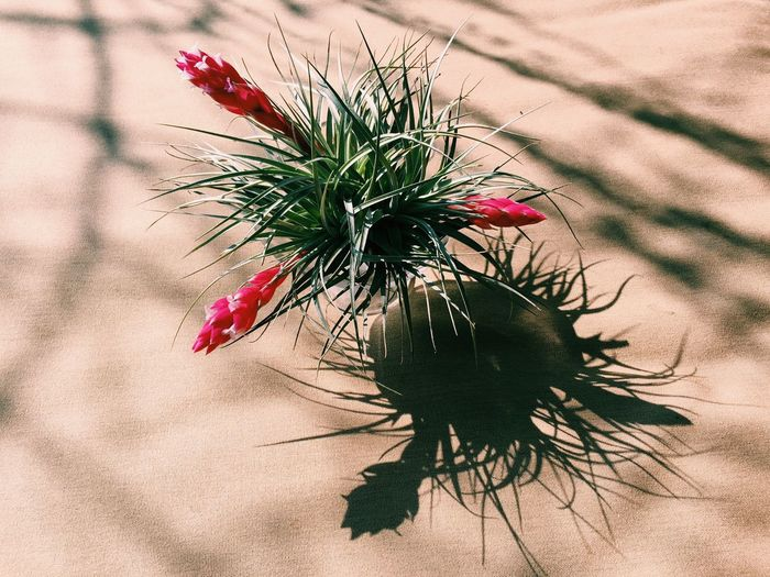 Chilling VSCO Vscocam Vscogood Japan Garden Spring Springtime Tillandsia Airplant Plant Plants Green Flower Flowers The Week On EyeEm Editor's Picks