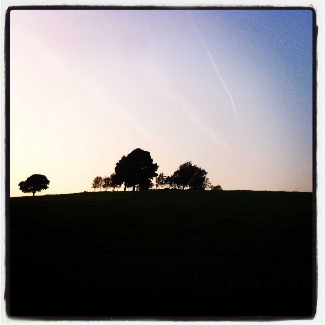 silhouette, tree, landscape, nature, field, clear sky, sunset, tranquil scene, grass, beauty in nature, tranquility, no people, sky, scenics, outdoors, animal themes, bird, day, mammal