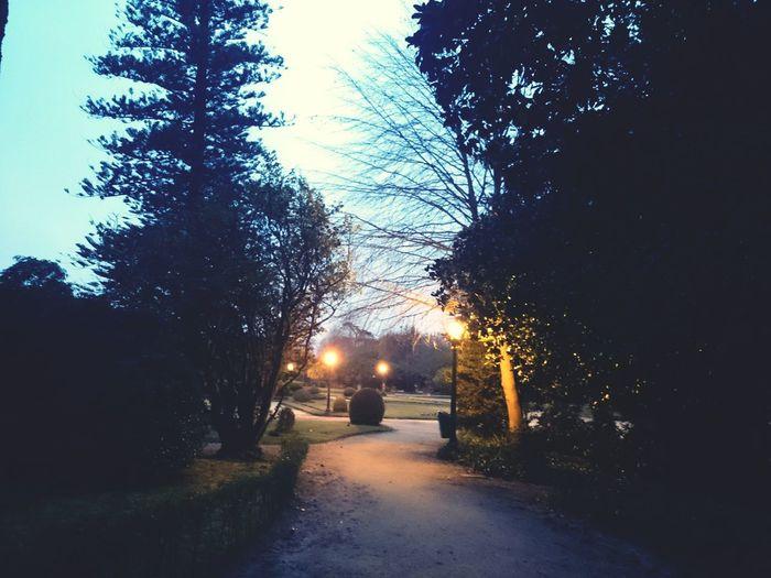 On My Way Wonderland Exploring Nature Hugging A Tree Wondering Palacio De Cristal Porto The Night Is Coming. Twilight