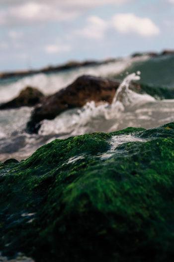 Moss growing on rock formation in sea