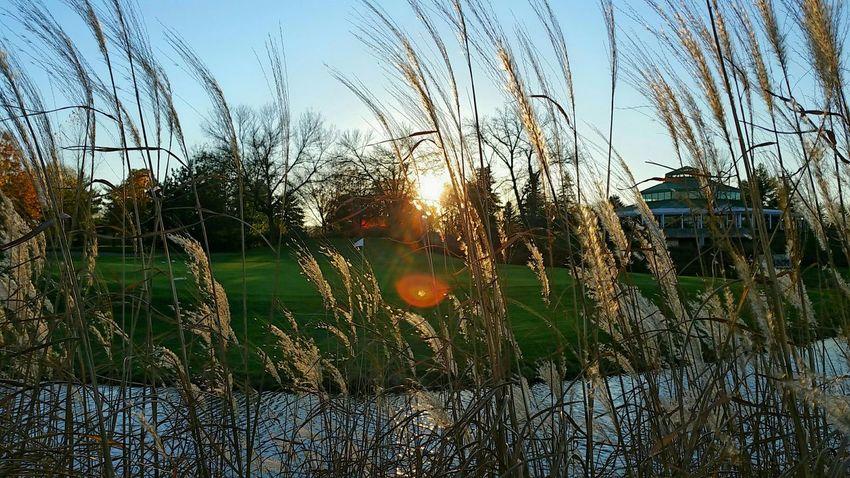 Fall Beauty Sunset Over Tall Grasses of Pond Bradleywarren Photography Bradley Olson Autumn Colors Sunset Sundown Tall Grasses Grassyfield Grass Pond Lake Lakeshore Dusk Lakeside