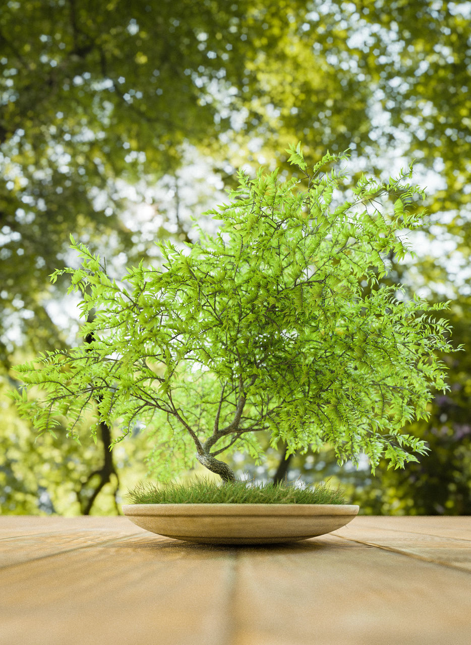 plant, tree, green color, nature, growth, day, no people, tranquility, outdoors, table, beauty in nature, selective focus, focus on foreground, wood - material, sunlight, food and drink, branch, close-up, window, tranquil scene