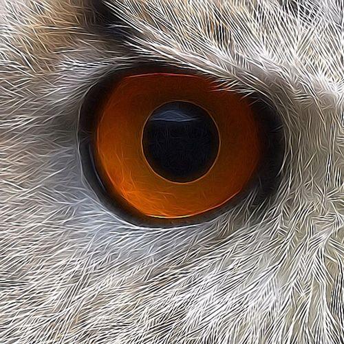 Skylers Eye 💕 SiberischeOehoe SibiricusEagleOwl Eagleowl OWLEYE Owl Owl Art Owls💕 Bird Bird Photography EyeEm Birds
