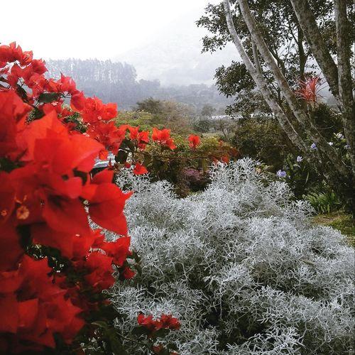 Chiriqui, Panama Flowers Plants 🌱 Taking Photos Check This Out Enjoying Life Beautiful Nature Garden Photography Loving Nature Doyoulikeit? Having Fun :)