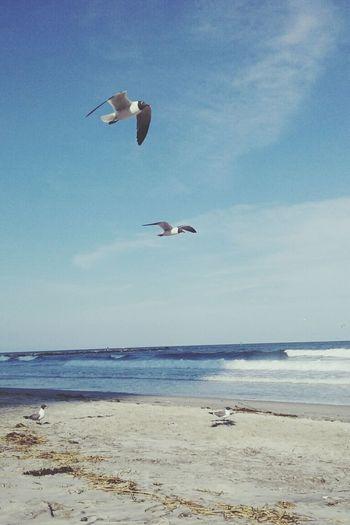 Just Beachy. Beachphotography Ocean Seagulls Waves Atlantic City