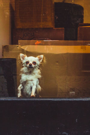 Alertness Animal Head  Animal Themes Dog Dog At Window Dog Waiting Domestic Animals Domestic Cat Mammal No People Pets Portrait Telling Stories Differently Up Close Street Photography Window Window Dog The Street Photographer - 2016 EyeEm Awards Long Goodbye