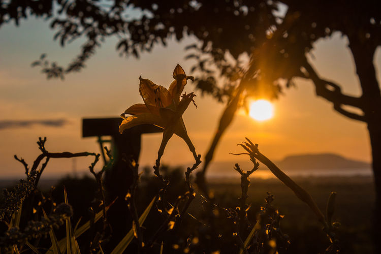Flower blooming against sky during sunset