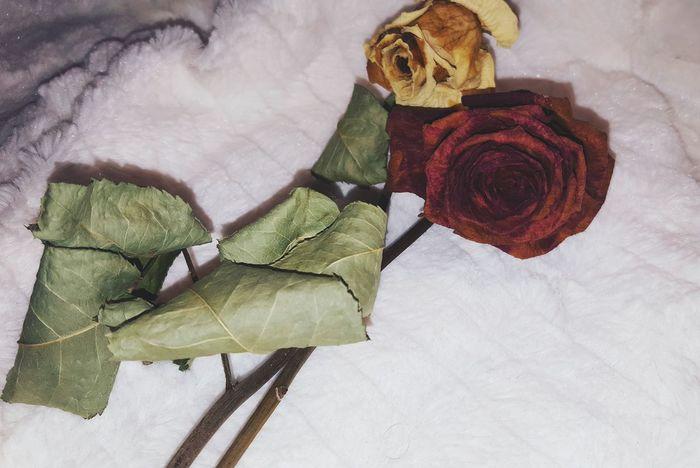 Fleur fané but still magique 🐘 Hello World ✌ Picoftheday Enjoying Life Blogger Young Adult Hello EyeEm Flowers Plants And Flowers Plants LoveFlower🌺 LoveFlowers🌸 Bloggerfashion Bloggerlife Fashion Photography Picofthemoment Followme Bloggerlife