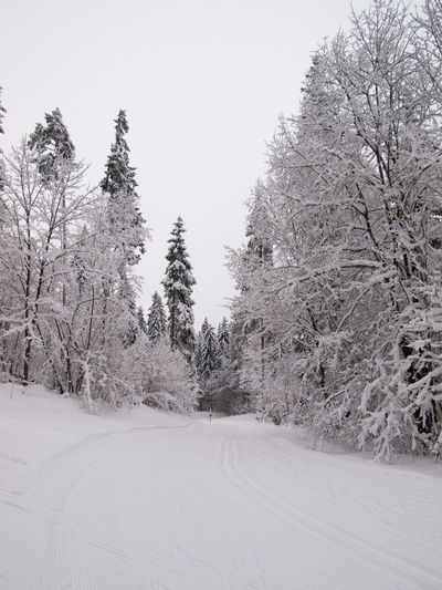 Cold Temperature Day Desaturated Estonia Landscape Nature No People Outdoors Ski Skiing Sky Snow Snow Covered Snow Covered Trees Snow ❄ Snowing Tree Winter