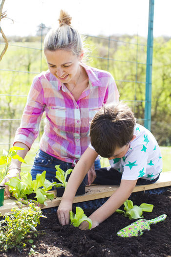 beautiful mother and her blond son planting salad in the raised bed in her garden Mother Nature Plant Salad Vegetarian Food Biology Bonding Boy Care Casual Clothing Child Childhood Day Females Gardening Girls Growth Innocence Leisure Activity Lifestyles Nature Outdoors Plant Planting Real People Son Three Quarter Length Togetherness Two People Vegan Vegetable Women