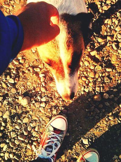 Dog Love Colected Comunity Random_Pics Empathy
