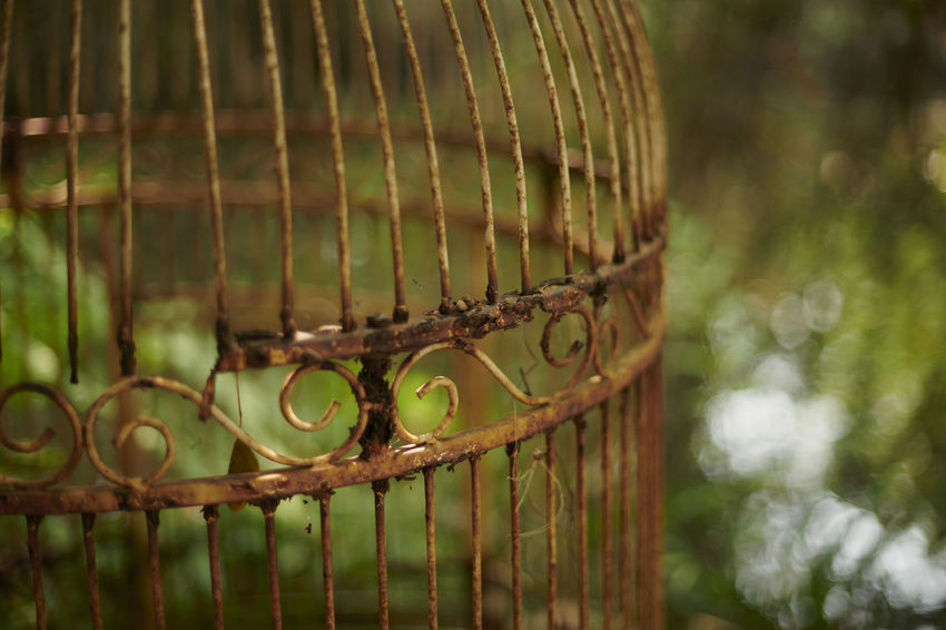Rush bird cage. Green Rust Abandoned Bird Cage Brown Close-up Forsake Mew