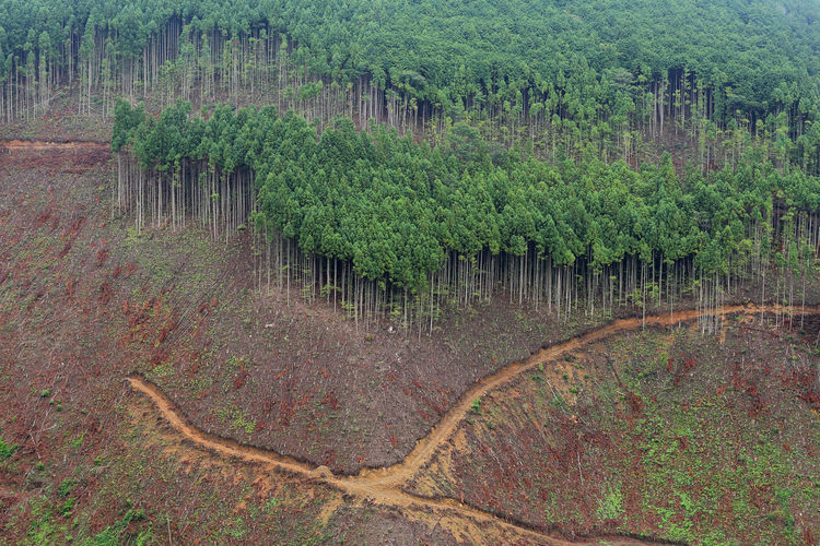 Aerial view of trees on mountain