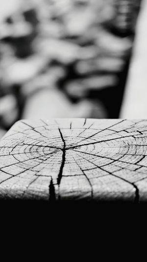 Timber web Taking Photos Enjoying Life Howoldisthisstick Timber