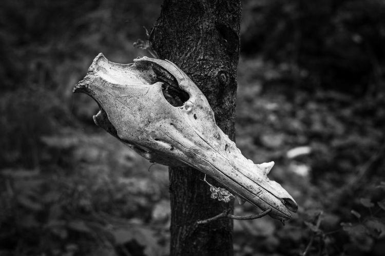 Close-up of animal skull on tree trunk