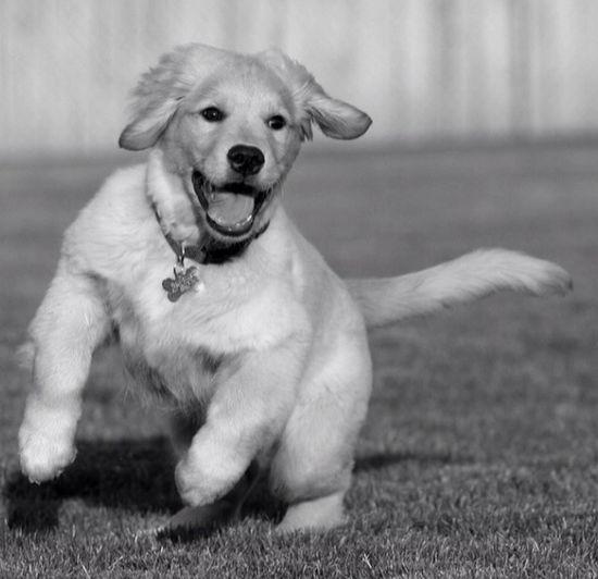 Puppy Love Myfamilyhunt Mypet playing mypet myfamilyhunt @myfamily hunt