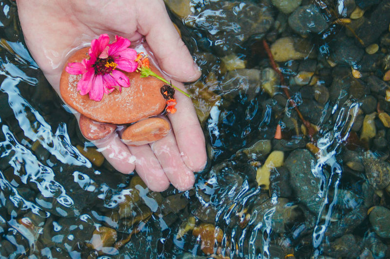 Close-up of hand holding fish swimming in water