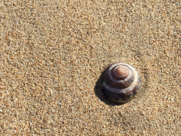 Learn & Shoot: Simplicity Sunshine Enjoying Life Sand Sea Shell Peace And Quiet Infinity Uncountable Summer