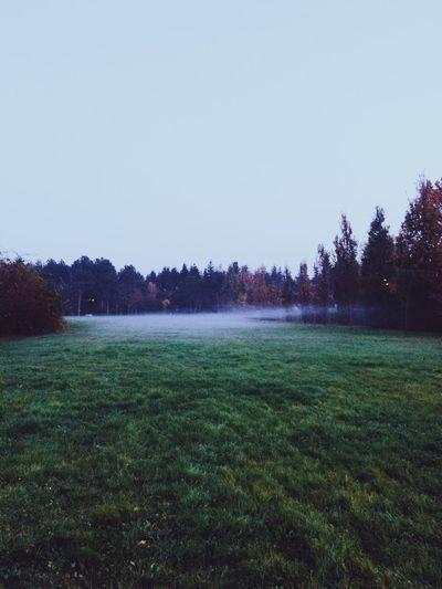 Fog Landscape Nature