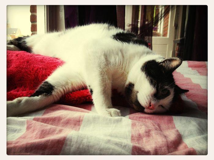 Gato dormiendo Gato Dormiendo Cat Sleeping