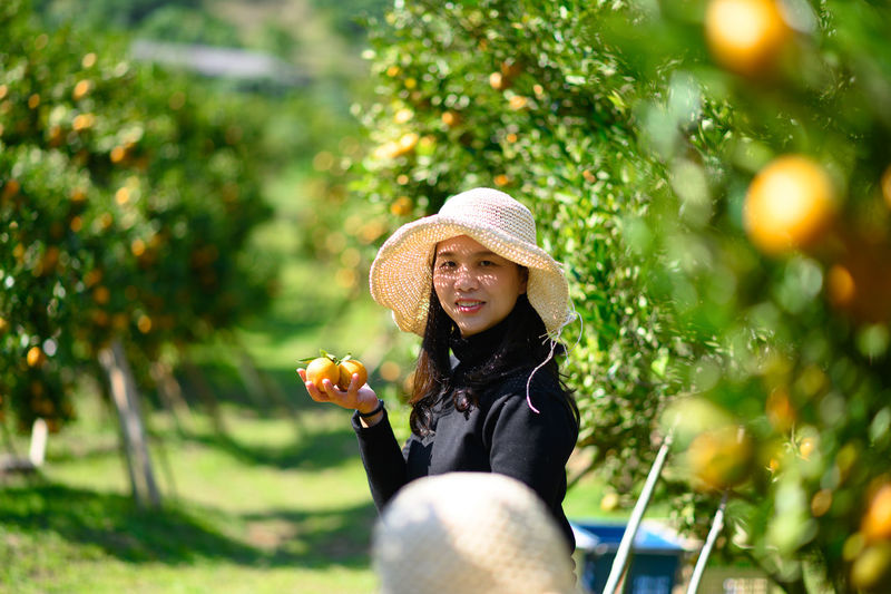 Asia female farmer picking carefully ripe woman picking ripe orange in orchard
