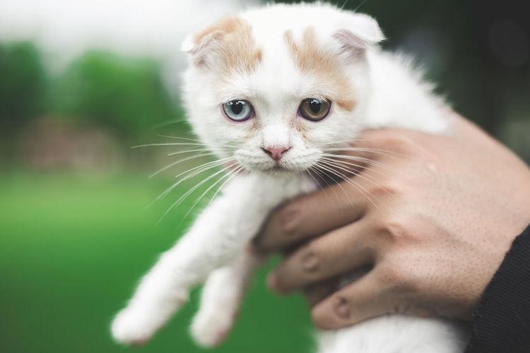 Close-up of kitten on hand