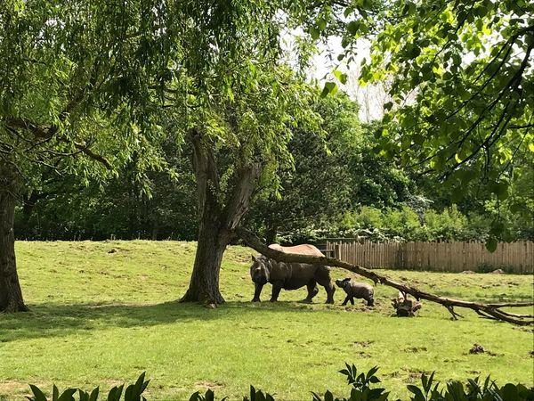 Tree Mammal Animal Plant Animal Themes Domestic Animals Vertebrate Animal Wildlife Sunlight