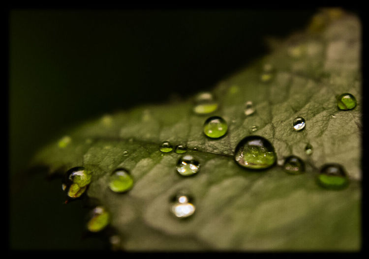 Leaf Selective