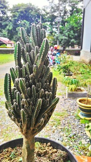 Cactus Flower I Love Cactus Campus Nature EyeEm Nature Lover Refreshing