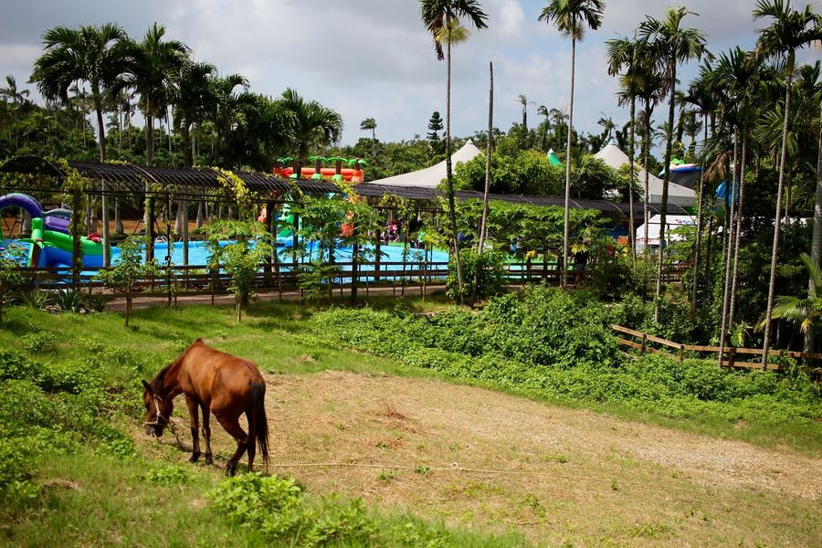 2016/08/28 Animal Horse Japan Okinawa One Animal 東南植物楽園 自然 馬