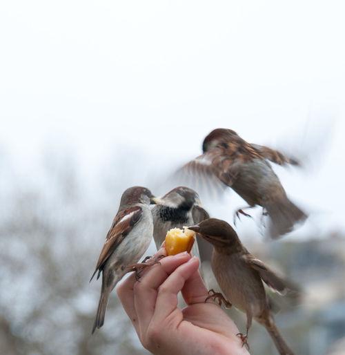 Cropped hand feeding birds against sky