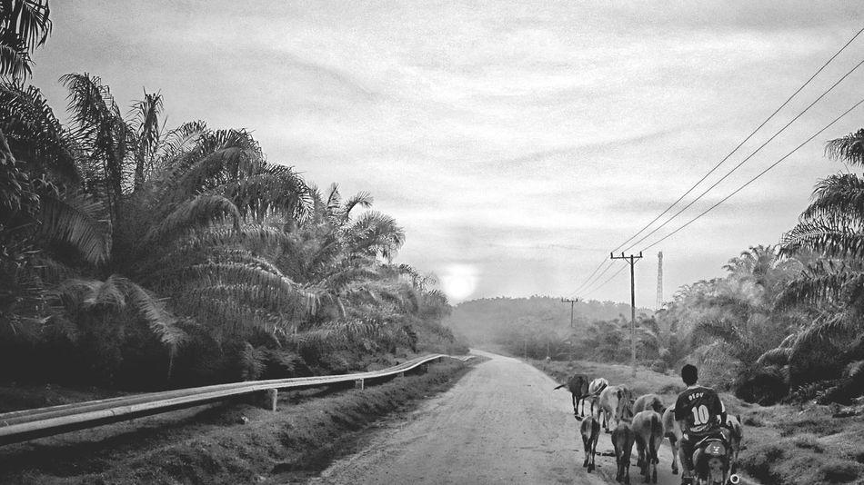 Pulang ... Enjoying Life Landscape_photography Black & White Bwphotoshoot Bwphoto Zemiphoto