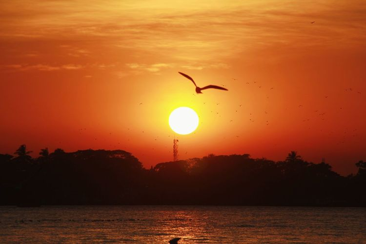Segull and Sunset Seagull Seagulls And Sea Water Sunset Full Length Gold Wave Gold Colored Bird Flying Yellow Silhouette Fly Romantic Sky