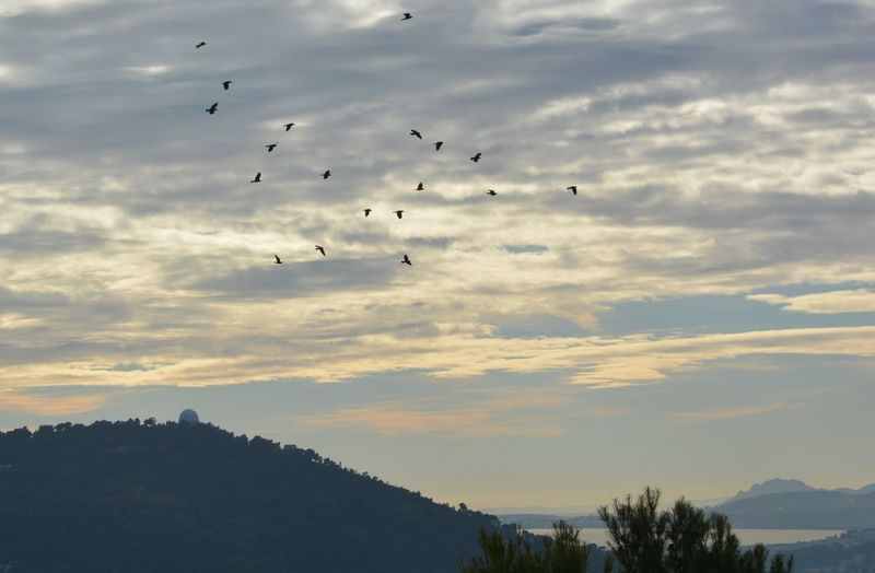 Ciel Bird Flock Of Birds Large Group Of Animals Animals In The Wild Flying Animal Themes Sky Mid-air Nature No People Outdoors Beauty In Nature Oiseaux Eyemphotography EyeEm Diversity EyeEmNewHere Photographe Photographer Nikon D7100 Nikon Jpho06 France🇫🇷