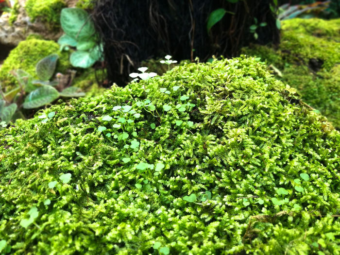 Beauty In Nature Day Green Color Growth High Angle View Land Leaf Mos Moss Nature No People Plant Rock Rock - Object Solid