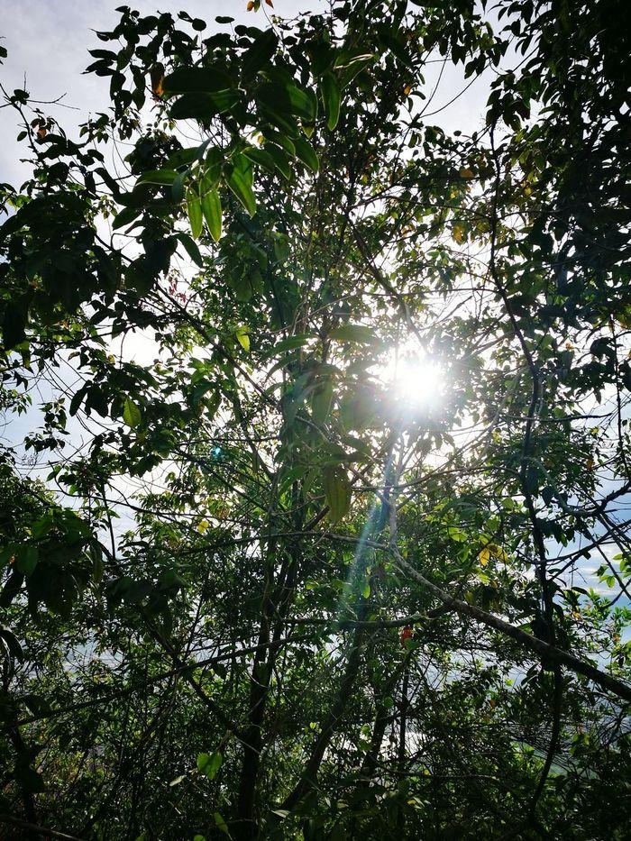 Sinar mentari Sun Tree Beauty In Nature Huawei P9 Leica