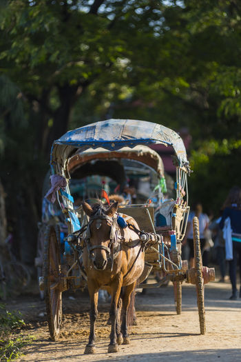 MANDALAY 2 November 2015, tourists hire horse carriage for ancient city tour in Ava, The Ava Kingdom was the dominant kingdom that ruled upper Burma (Myanmar) from 1364 to 1555. Amarapura Ancient Animal Arch ASIA Asian  Ava Bagan Beautiful Buddhist Burmese Carriage Cart Classical Color Countryside Culture Destination Driver Exploration Famous History Holiday Horse Indigenous  INNWA Inwa Journey Landscape Mandalay Myanmar Outdoor Passage People Place Portrait Religion Retro Revival Riding Road Street Temple Tourism Traditional Transportation Travel Trees Vacation Vehicle