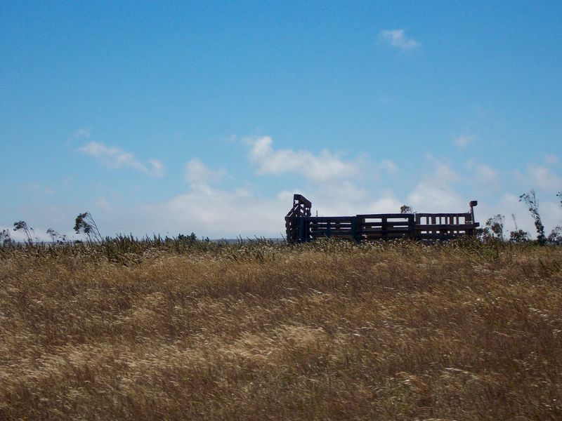Summertime Summer Blue Sky Outside Naturelovers Making Pictures NoPeopleAround Landscape #Nature #photography Taking Pictures Landscapes Land And Sky Nature Photography Windy Day Landscape Landscape Nature Photography [ Field Pallets Palletproject