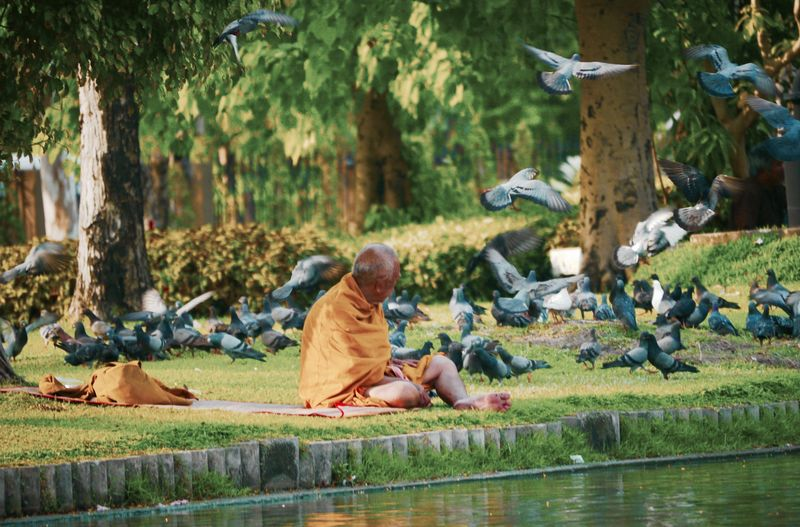 Animal Themes Bird Day Escapism Friendship Monk  Mönch Outdoors Side View Tauben Water Zoology Spotted In Thailand Lumpini Park