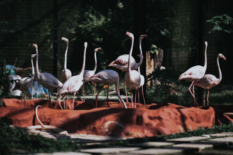 View of flamingo