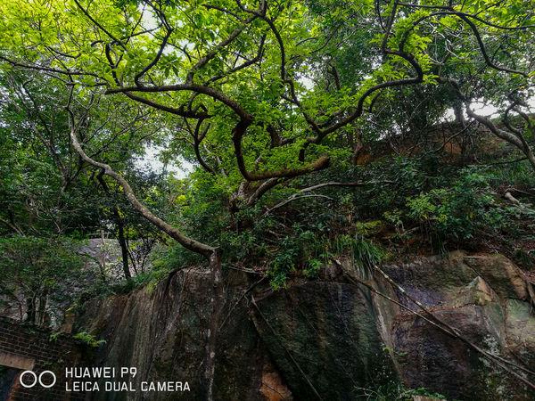 華為p9 Landscape hong Kong Huawei P9 Leica Dual Camera Smartphonephotography